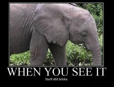 When You See It You Will Shit Bricks #29 - http://www.funnyphotos4u.com/when-you-see-it-you-will-shit-bricks-29/