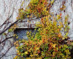Hidden window - null