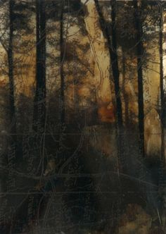 Emotion, image 6 Autumn Woodland, by Nerine Tassie, Mixed Media on Printed Perspex, date unknown. Landscape Artwork, Watercolor Landscape, Watercolor Art, Modern Art, Contemporary Art, Sky Art, Photo Tree, Artist At Work, Aesthetic Pictures
