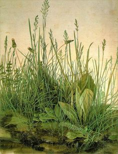 :: Albrecht Dürer 'The Large Turf' or 'The Great Lawn', 1503 ::