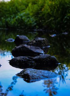 This was taken in a little stream near my house. I just thought it was amazing how the stones seemed to line up perfectly and the way the plants and sky were reflecting in the water. Back Gardens, The Great Outdoors, My House, Nature Photography, Waterfall, Stones, Sky, Amazing, Flowers