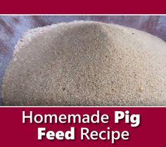 Homemade Pig Feed Recipe - Homemade Pig Feed Recipe – tried and tested formula for fatter pigs, faster… # - Livestock Farming, Pig Farming, Backyard Farming, Mini Pig Food, Mini Pigs, Hog Farm, Pig Feed, Fat Pig, Raising Farm Animals