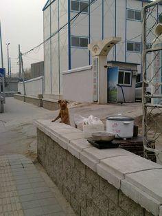 一个狗在西直门卖煮玉米、茶叶蛋、煲粥兼眺望远方