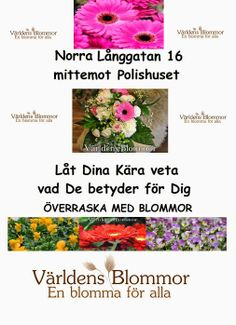 Världens Blommor Norra Långgatan 16 26131 Landskrona