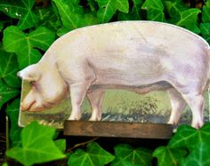 1930's Antique Die Cut Cardboard Standing Lithograph Yorkshire Pig