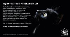 Top 10 Reasons to Adopt Black Cats