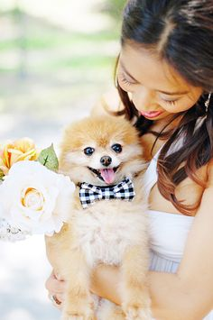 No-Sew Wedding Bow-Tie for Dogs | Photo by Chic Sprinkles #DIY #dog #wedding #bowtie