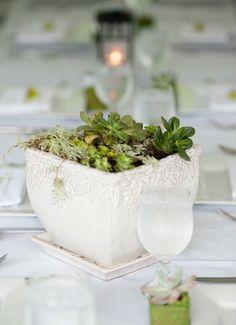 Succulents are always a good decor idea!