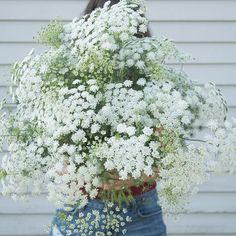 Dill (Ammi Majus) annual, h - aka Queen Anne's Lace All Flowers, White Flowers, Beautiful Flowers, Wedding Flowers, Flowers Bucket, Order Flowers, Spring Flowers, Lace Wedding, Cut Flower Garden