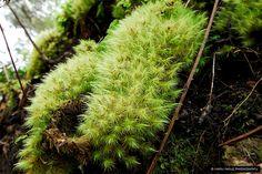 Moss Texture