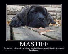 LOL! #mastiff