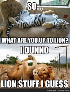 What are you upto lion?