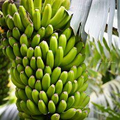Banana by Lisa Kohnen Bananas, Lisa, Fruit, Nature, Food, Naturaleza, Essen, Meals, Banana