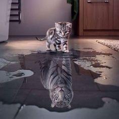 poes-tijger