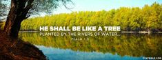 Psalm 1:3 NKJV - Planted By Rivers Of Water - Facebook Cover Photo