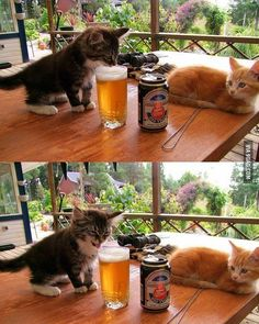 Finally I get to try what this hooman always drinks. #9gag @9gagmobile by 9gag