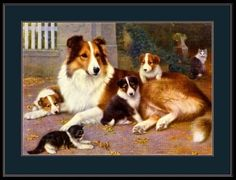 English-Print-Collie-Dog-Puppy-Cat-Kitten-Art-Picture-Poster