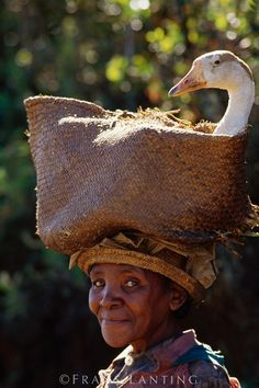 African woman taking goose to market, Central Madagascar