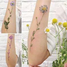 chamomile  real flower - stencil - tattoo #liveleaftattoo #botanicaltattoo #botanical #flowertattoo #chamomiletattoo #chamomile #tattrx #ritkit #ritkittattoo