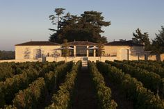 Château de Ferrand Grand Cru Classé Saint-Emilion. #vignoble #saintemilion #wine