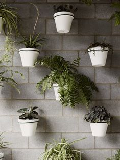 fabulous use of simple items, adds greenery, low cost, and low maintenance. The simplicity and consistency of the white and green together make it work.