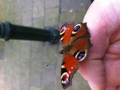 Goed gekozen rustplek van deze vlinder #lente