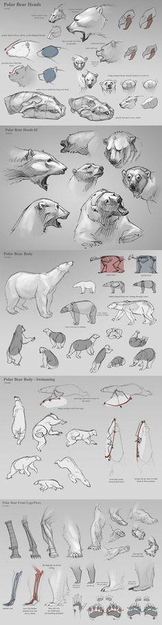 Anatomia animal para Animadores e Ilustradores | notodoanimacion.es