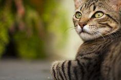 Danilo Barbosa, Piracicaba (SP), na foto, a gata Mel. Gosto do resultado com o fundo desfocado.