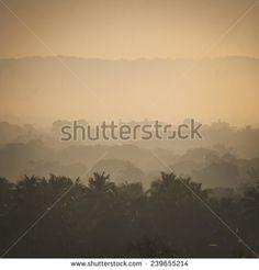Foliage Tropical Fotos, imagens e fotografias Stock | Shutterstock
