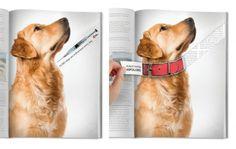 Anúncio em revista de ONG incentivando a adoção de cães