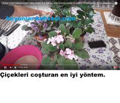 Growing Flowers, Flower Decorations, Flora, Good Things, Island, Simple, Plants, Flower Ideas, Gardens
