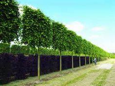 Die 17 Besten Bilder Von Spalierbaume Landscaping Vegetable