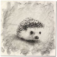 hedgehog sketch - Google Search