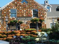 Wilson's Farm, Lexington, MA.  I miss shopping at this place so much!!!!!!!!!!!!
