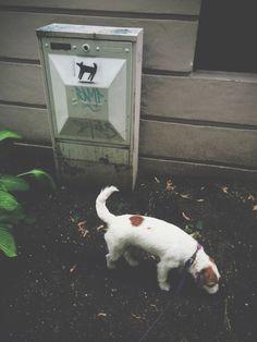 - look milli, fanart! Fanart, Dogs, Cute, Animals, Animales, Animaux, Pet Dogs, Kawaii, Fan Art