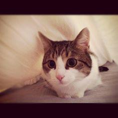 kitty, kitty, kitty...
