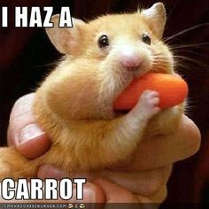 This exactly what my hamster looked like:)