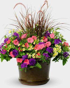 Purple fountain grass, pink petunia, purple verbena, white calibrachoa (million bells)