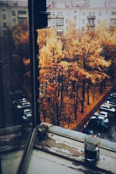 If I'm to live in a city, I'd prefer to live with at least a small park view...with autumn leaves and spring budding.