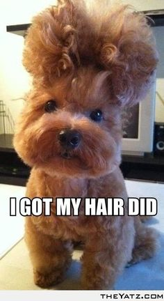 I got my hair did...