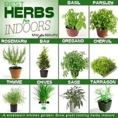 Best herbs for indoor garden - kitchen garden