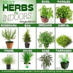 Best herbs for indoor garden - kitchen garden
