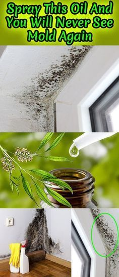 Spray This Oil And You Will Never See Mold Again