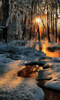 Ideas For Winter Landscape Photography Christmas Woods All Nature, Amazing Nature, Nature Tree, Nature Water, Winter Photography, Landscape Photography, Tree Photography, Scenic Photography, Winter Scenery