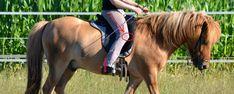 Klammern beim Reitern Horseback Riding, Dressage, Equestrian, Horses, Animals, Sport, Kugel, House Ideas, Knowledge
