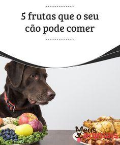5 frutas que o seu cão pode comer É certo que algumas #frutas, como o #abacate ou as uvas, podem ser #perigosas para o seu #animal de estimação. Entretanto há algumas frutas que o cão pode comer. #Alimentação