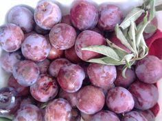 Fruts by Matinho garden
