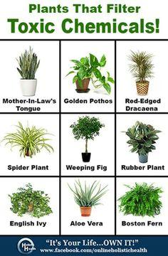 Filter plant