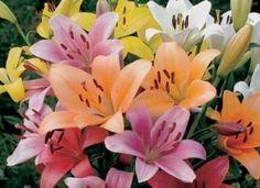 imagenes con flores y frases bonitas