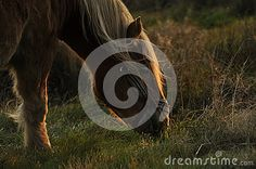 Horse on the meadow graze
